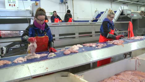 Women-work-on-an-assembly-line-at-a-fish-processing-factory-2