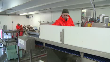 Men-work-cutting-and-cleaning-fish-on-an-assembly-line-at-a-fish-processing-factory-2