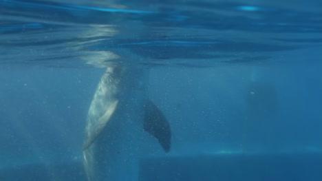 Dolphin-0-0-23