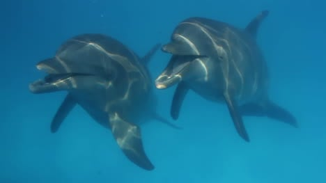 Dolphin-27
