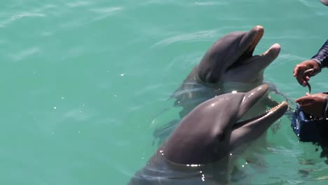 Dolphins-342
