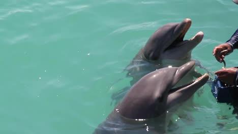 Delfines-342