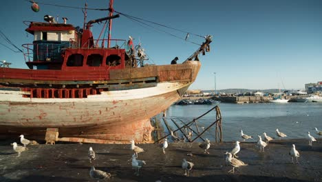 Essaouira-Boats-16