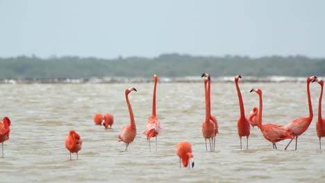 Flamingo-00