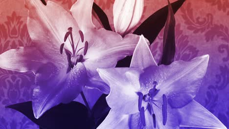 Flower-Wallpaper-05