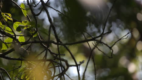Forest-Focus-00