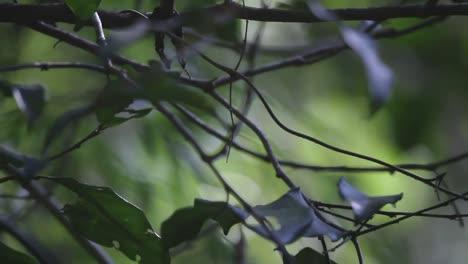 Forest-Focus-01