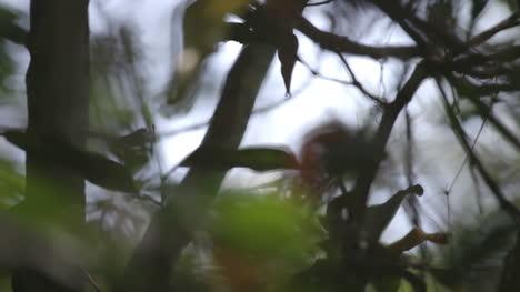 Forest-Focus-02
