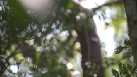 Forest-Focus-03