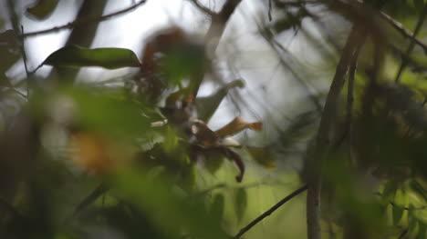 Forest-Focus-04