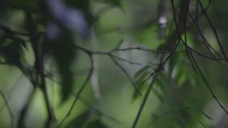 Forest-Focus-05