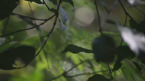 Forest-Focus-07