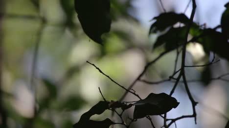 Forest-Focus-09