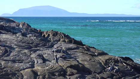 Marine-iguanas-are-perfectly-camouflaged-on-volcanic-stone-in-the-Galapagos-Islands-Ecuador