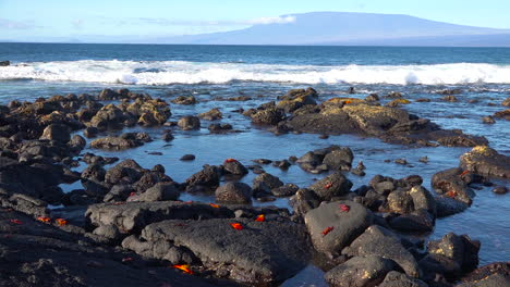 Wide-establishing-shot-of-the-Galapagos-Islands-with-bright-red-Sally-Lightfoot-crabs-on-rocks-nearby