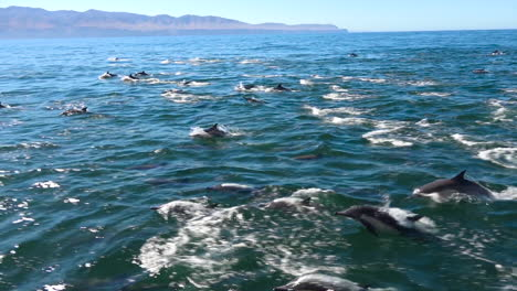 Thousands-of-dolphins-migrate-in-a-massive-pod-through-the-Channel-Islands-National-Park-1