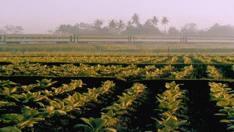 A-train-passes-through-a-field-in-rural-Indonesia