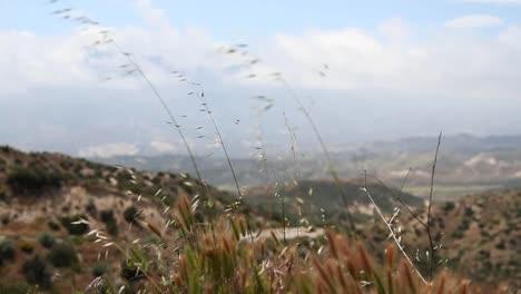 Grass-Closeup