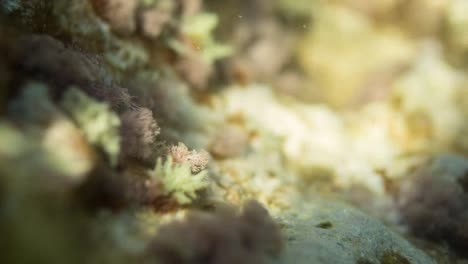 Half-Underwater-09