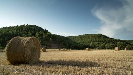 Harvest-Field-00
