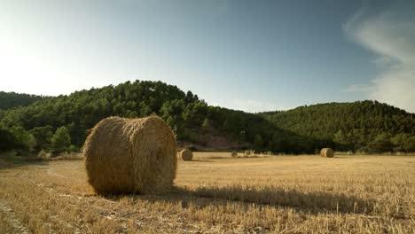 Harvest-Field-01