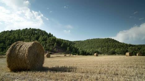 Harvest-Field-Timelapse-00
