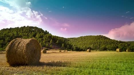 Harvest-Field-Timelapse-02