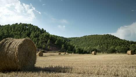 Harvest-Field-Timelapse-03