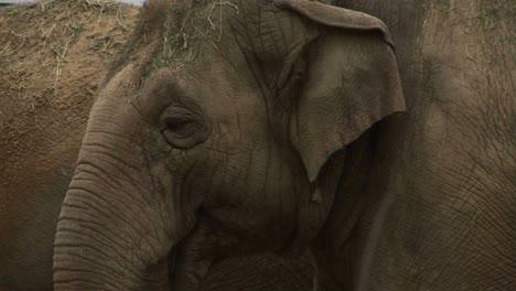 An-elephant-eats