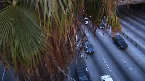 A-tall-palm-tree-looms-over-a-busy-freeway