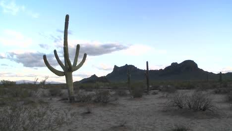 Desert-brush-moves-by-a-light-breeze