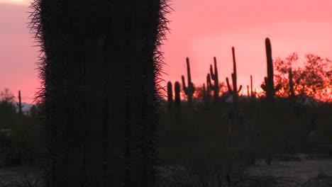 Atardecer-Del-Desierto-Rojo-Con-Un-Paisaje-De-Campo-De-Cactus