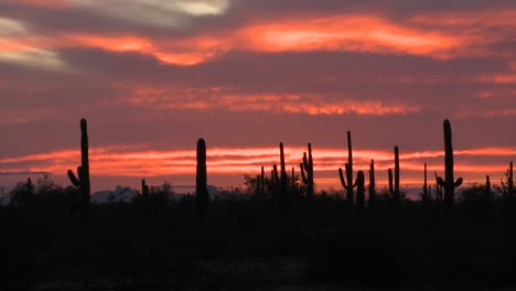 The-sun-is-setting-over-a-field-of-cactus