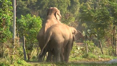 Three-elephants-in-the-zoo