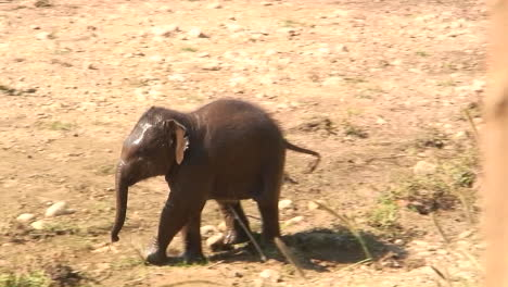 Baby-elephant-runs-near-the-shore-line