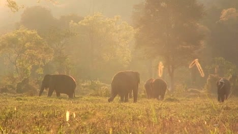 A-couple-of-people-walk-through-a-field-with-a-herd-of-elephants
