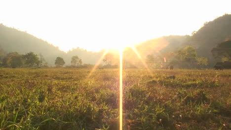 Elephants-walk-in-an-open-field-near-sunset