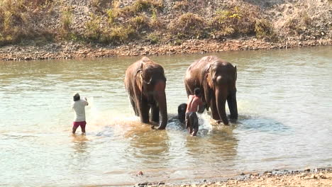 Two-men-with-buckets-throw-water-on-a-couple-of-elephants-in-a-river