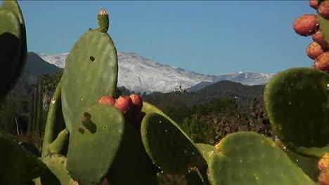 Cactus-bathe-in-bright-sun-light