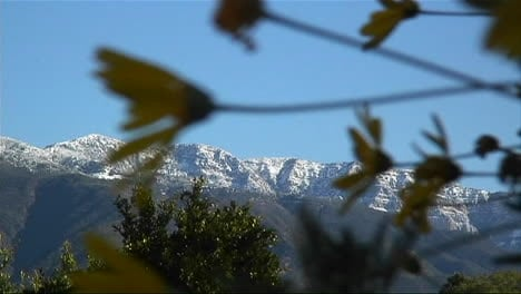 Snow-covered-mountains-are-viewed-through-waving-branches