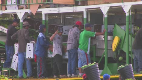 Mexican-farm-workers-carry-produce-to-a-machine-for-men-and-women-to-sort-and-process
