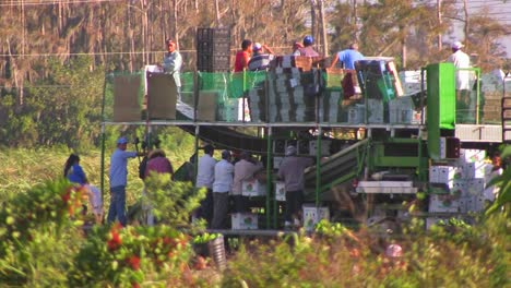 Mexican-farm-workers-carry-produce-to-a-machine-for-men-and-women-to-sort-and-process-2
