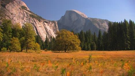 Los-árboles-Están-En-El-Borde-De-Una-Pradera-De-Montaña-En-El-Parque-Nacional-De-Yosemite-California