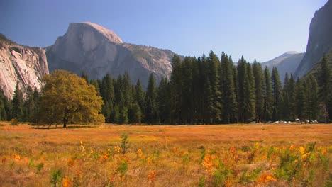 Bäume-Stehen-Am-Rand-Einer-Bergwiese-Im-Yosemite-Nationalpark-Kalifornien-1