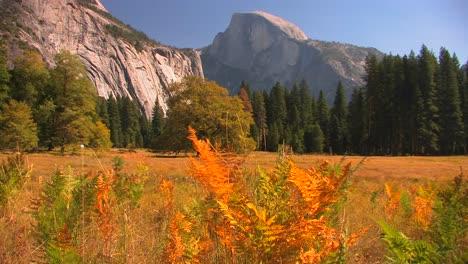 Los-árboles-Se-Encuentran-En-El-Borde-De-Una-Pradera-De-Montaña-En-El-Parque-Nacional-De-Yosemite-California-2