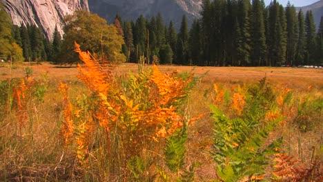 Bäume-Stehen-Am-Rand-Einer-Bergwiese-Im-Yosemite-Nationalpark-Kalifornien-3