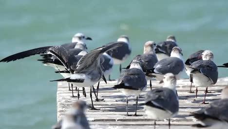 Largartos-Birds-08