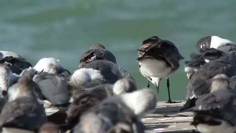 Largartos-Birds-11