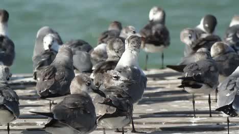 Largartos-Birds-12