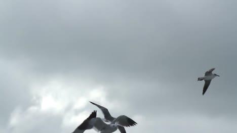 Largartos-Birds-16